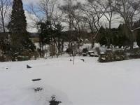 なごり雪19-03-24.jpg